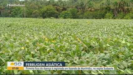 Ferrugem asiática é encontrada em folhas de soja em fazenda de Montividiu