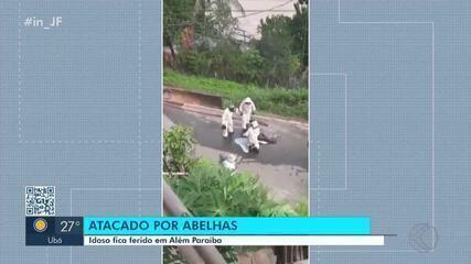 Idoso é atacado por enxame de abelhas em Além Paraíba