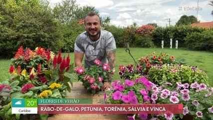 Aprenda a cultivar flores no verão
