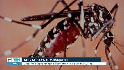 Dengue fez mais vítimas em 2020 do que em 2019