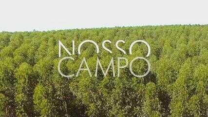 Confira o 2º bloco do Nosso Campo deste domingo, 17 de janeiro