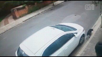 Polícia investiga abandono após casal deixar cachorro na rua em Assis
