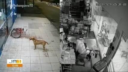 Homem furta estabelecimento em Gurupi e cão vira 'cúmplice' do crime