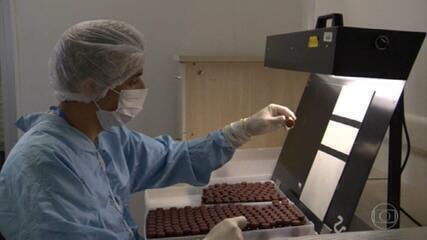 Ministério da Saúde detalha plano de distribuição da Vacina Oxford/Astrazeneca importada da Índia
