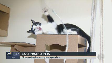 Casa Prática Pets: veja dicas e cuidados para gatos hiperativos