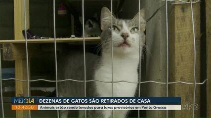 Após decisão judicial, dezenas de gatos são retirados de casa em Ponta Grossa