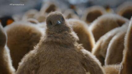 Bichos Espiões: filhote robô registra tropa de pinguins com olho biônico