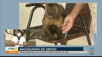 Família que teve casa invadida por macaco decide deixar ele solto no local, na PB
