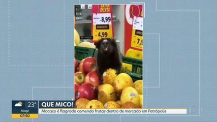 Mico é flagrado dentro de supermercado em Petrópolis