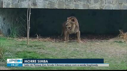 Morre Simba, o leão do Parque Arruda Câmara