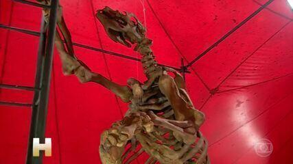 Exposição em Manaus reúne animais que viveram na Amazônia há milhões de anos