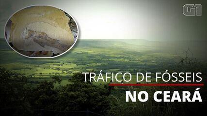 Fósseis extraídos ilegalmente do Ceará são vendidos por até US$ 150 mil cada no exterior