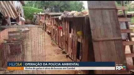 Rinha de galos é alvo de operação em Cambé