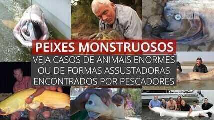 'Peixes monstruosos': veja casos de animais enormes ou de formas assustadoras encontrados