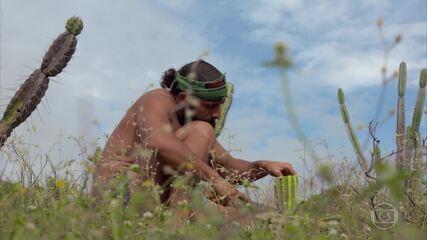 Kaysar prepara cactos para a tribo Calango
