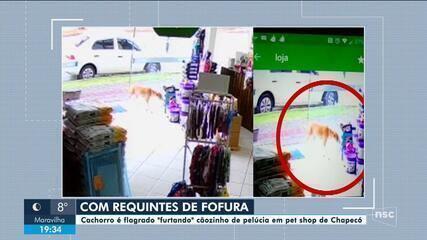 Cachorro é flagrado 'furtando' cãozinho de pelúcia em pet shop de Chapecó
