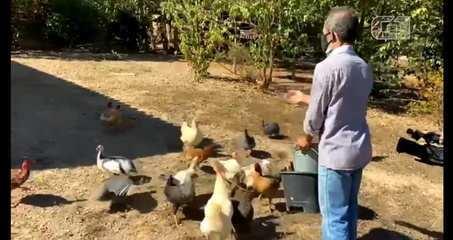 Grupo leva alimento para animais que passam fome em fazendas onde há buscas por Lázaro, GO