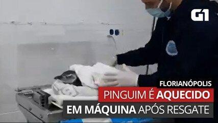 Após ser resgatado, pinguim é aquecido em equipamento