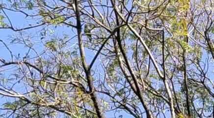 Papagaio foi resgatado em árvore após gritar 'socorro' e chamar atenção de moradores