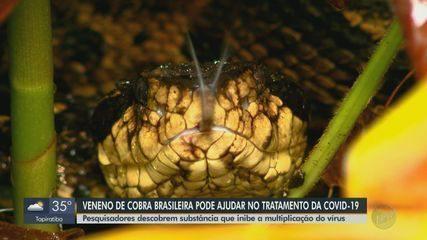 Pesquisadores descobrem que veneno de cobra brasileira pode ajudar no tratamento da Covid