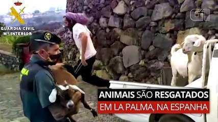 Animais são resgatados na Ilha de La Palma, na Espanha