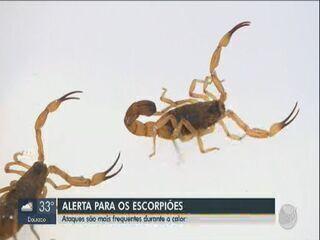 Com chegada do calor atenção deve ser redobrada com ataques de escorpião