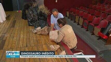 Primeira espécie de dinossauro carnívoro é encontrada da região de Monte Alto, SP