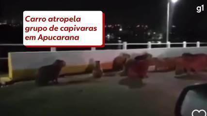 Carro atropela grupo de capivaras em Apucarana