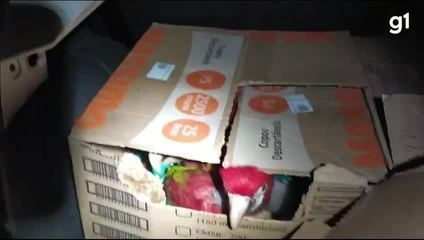Polícia encontra 120 araras e papagaios amontoados em caixas de papelão em Itatiaia; VÍDEO