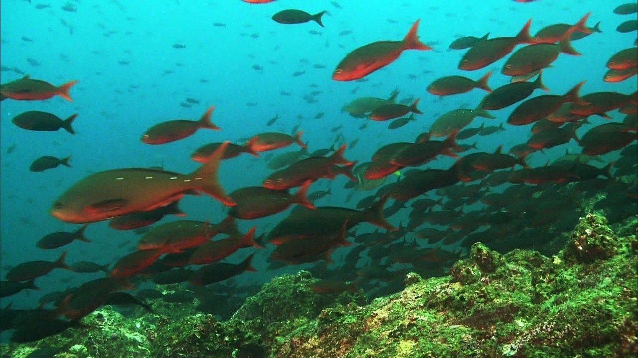 Globo Natureza: Cardumes de Galápagos