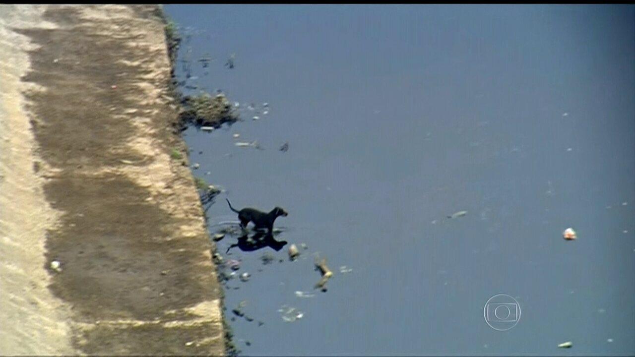 Cachorro nada para tirar lixo do Rio Tietê perto do Cebolão