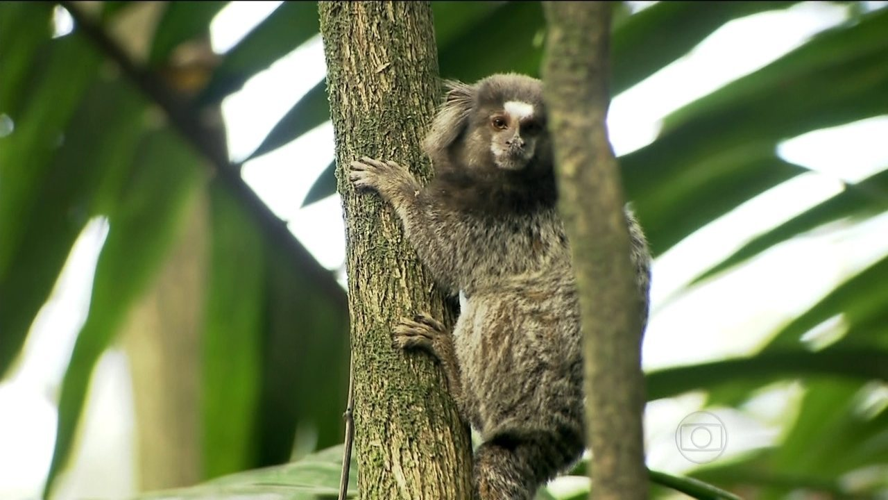Aparador Colonial De Madeira ~ SP1 Parque na Zona Sul de SP tem espaço dedicado aos animais silvestres Globoplay