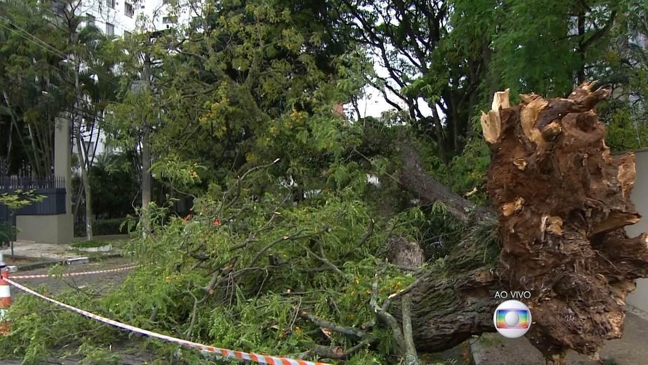 Aparador Colonial De Madeira ~ Bom Dia SPÁrvore cai e atinge dois carros na Zona Sul de S u00e3o Paulo Globoplay