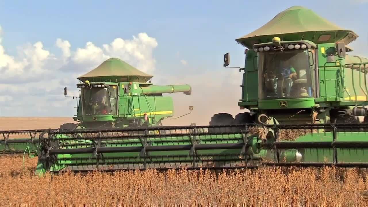 Levantamento sobre a moratória da soja mostra aumento de lavouras na Amazônia