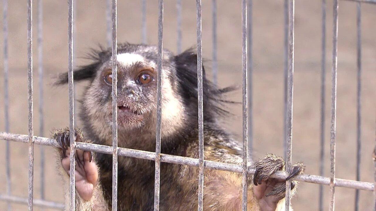 Centro de Triagem faz trabalho de reabilitação para devolver animais para a natureza