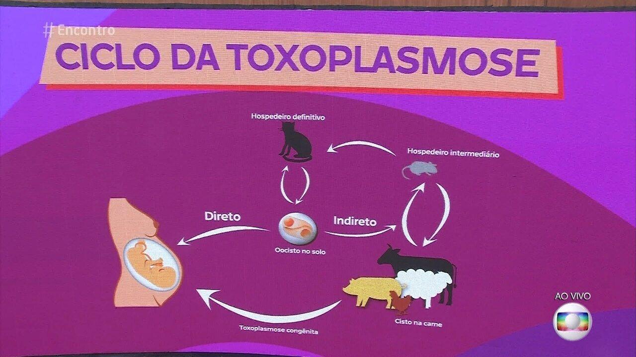 Veterinária Rita Ericson explica como a toxoplasmose é transmitida