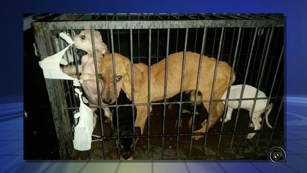 Polícia Ambiental resgata 46 cães com sinais de maus-tratos em suposta ONG em Itapeva
