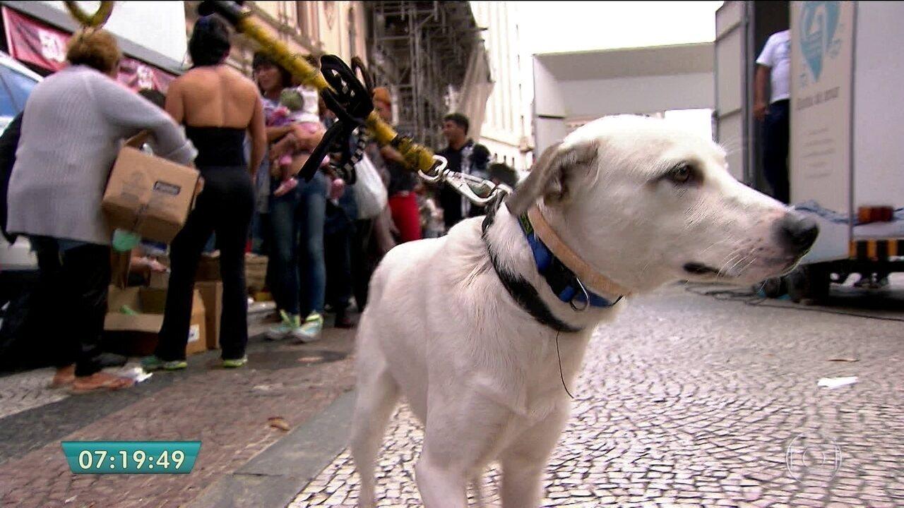 Voluntários ajudam moradores de rua e seus cachorros de estimação