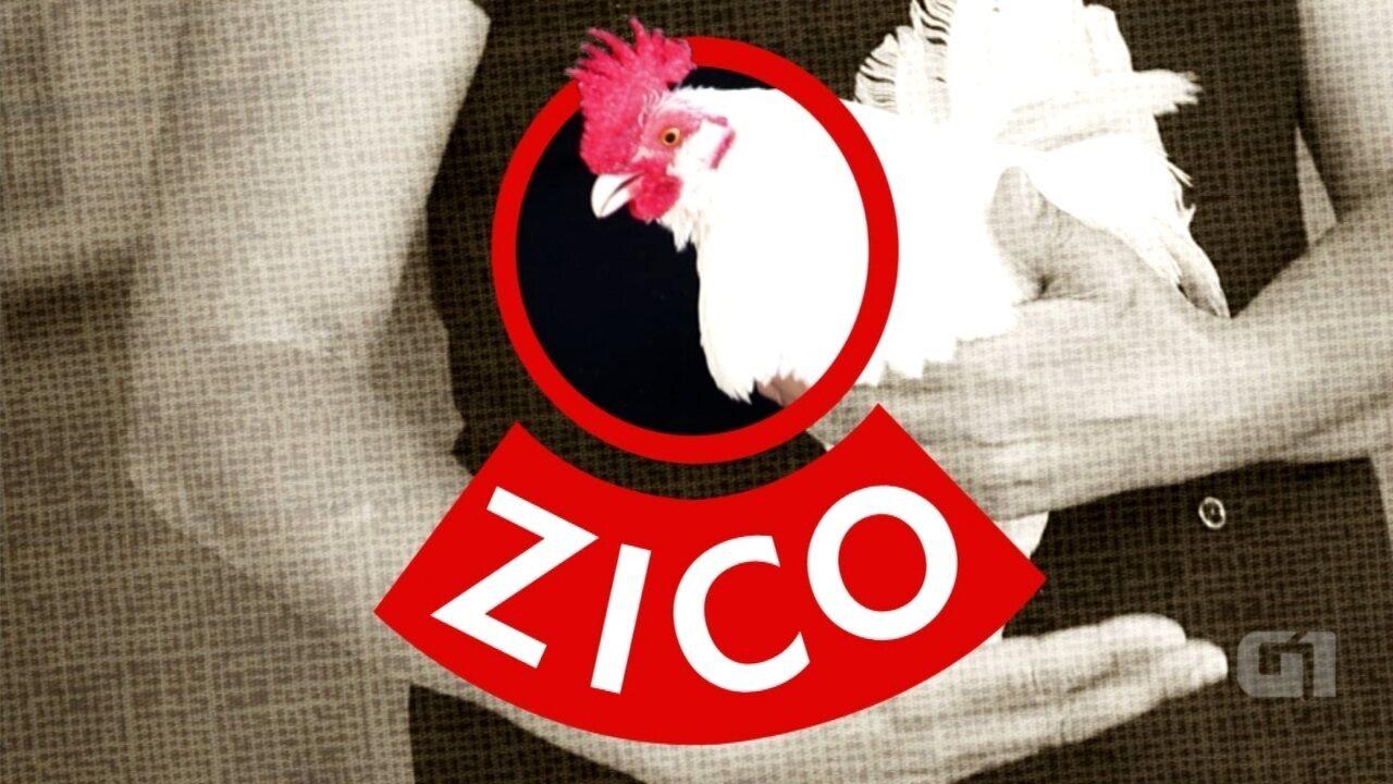Conheça Zico: Um galo que pega ônibus e virou xodó de bairro em Sorocaba