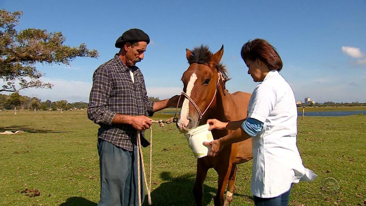Cavalos passam por programa de adoção em Porto Alegre e aguardam novo lar