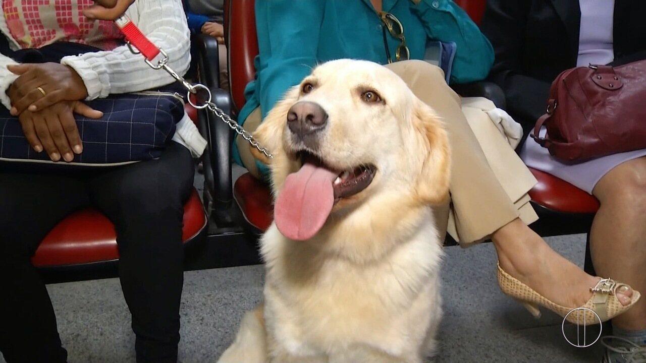Terapia com o auxílio de cães melhora o quadro de pacientes oncológicos de Petrópolis