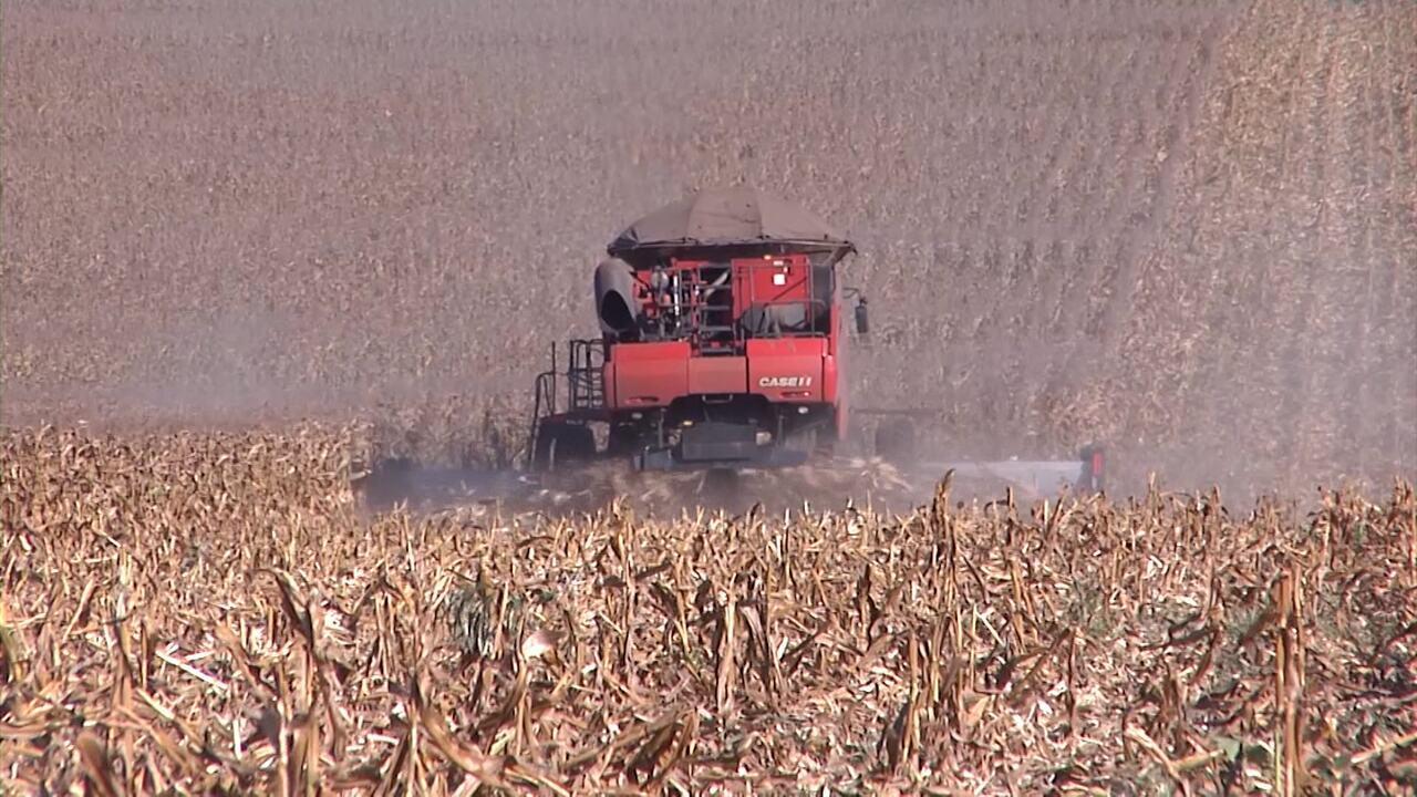 Colheita da safrinha de milho no sul do Maranhão é destaque no Mirante Rural