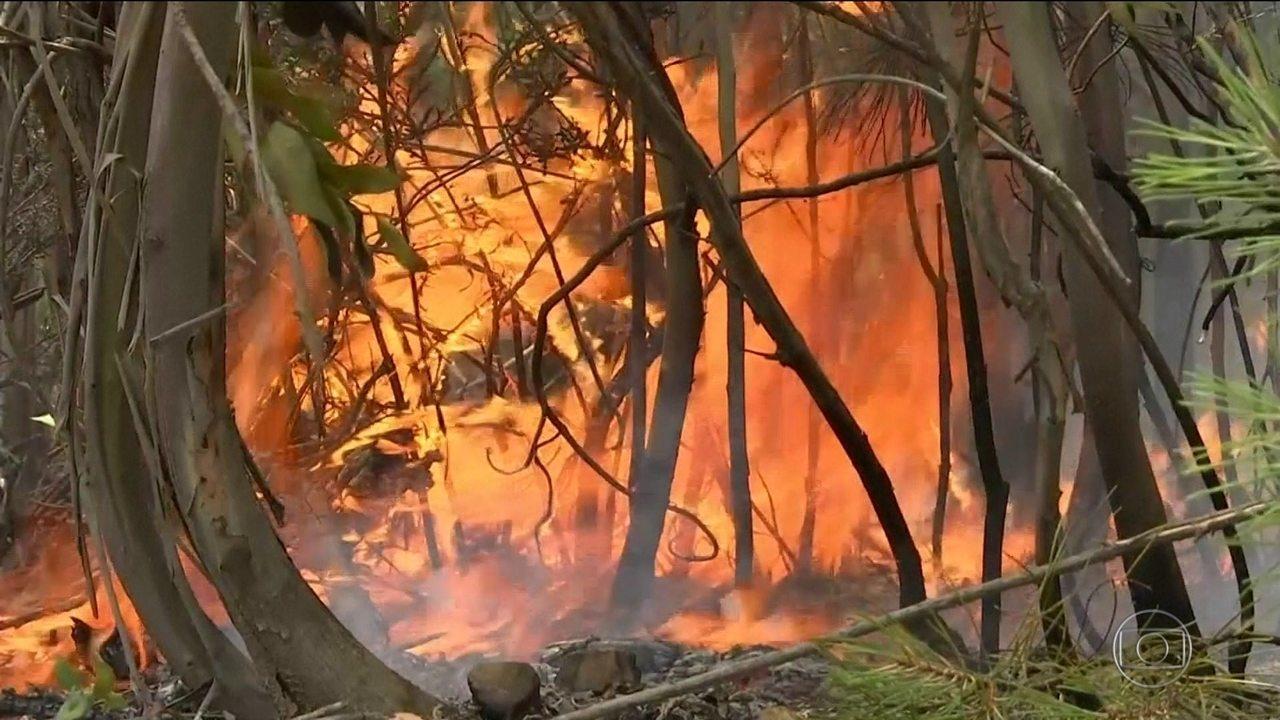 Dois mil bombeiros combatem focos de fogo em vegetação em Portugal