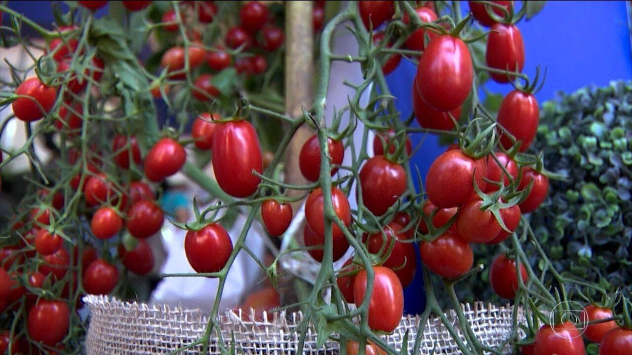 Feira de hortas mostra novidades em Holambra (SP)