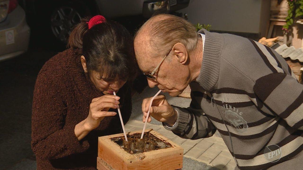 Senhor de 84 anos cria abelhas como animais de estimação em Artur Nogueira