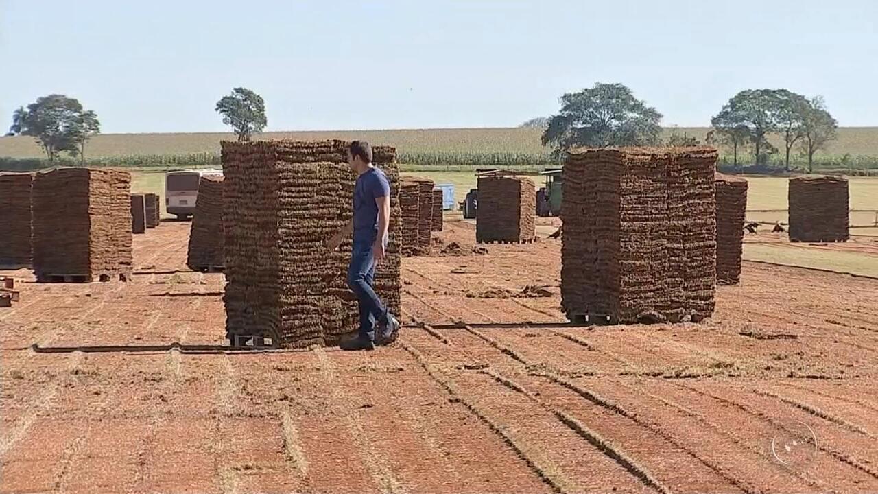 Produção de grama cai na região de Itapetininga
