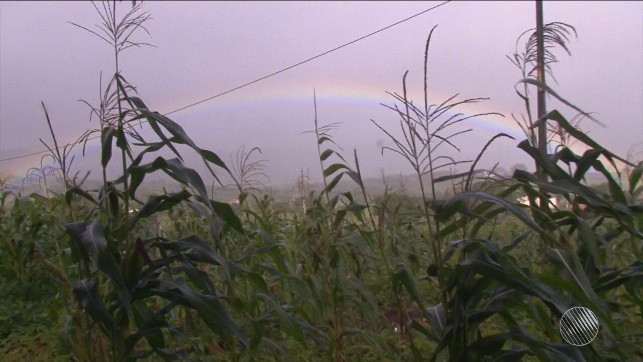 Chuva muda paisagem na zona rural de Feira de Santana, que estava sofrendo com a seca