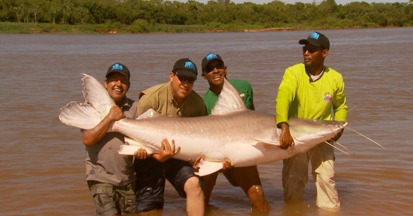 Piraíba de 140 quilos é o maior peixe de água doce fisgado pelas equipes do TG