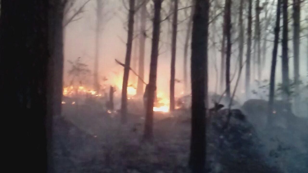 Fogo atinge área de vegetação em Irani