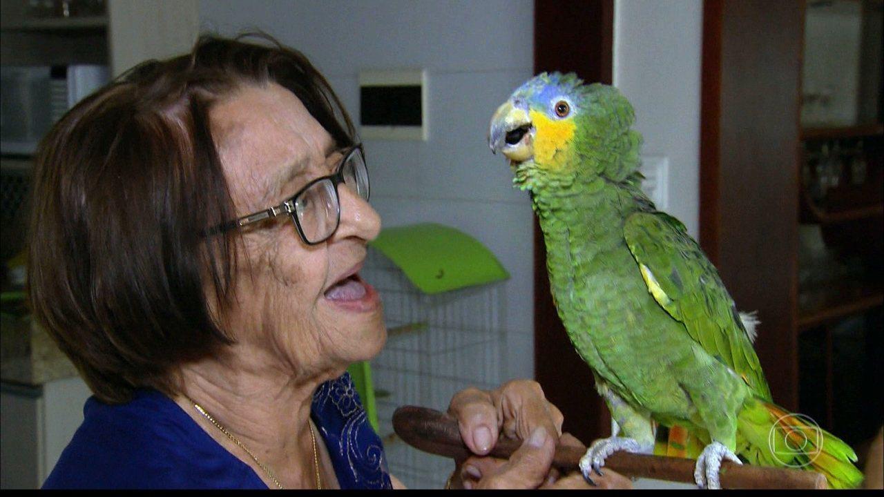Fantástico mostrou história de idosa que cria papagaio em Cajazeiras